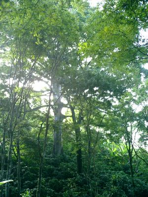 nature property for sale Atenas Costa Rica