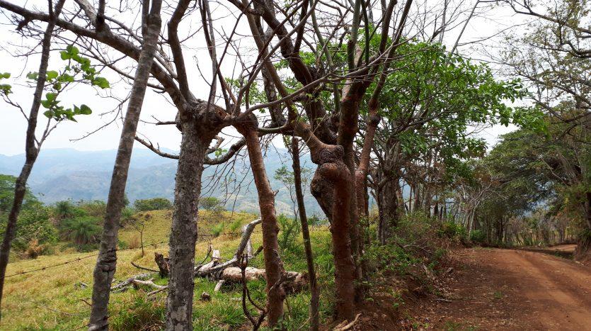 16 acre property for sale near Atenas, Costa Rica