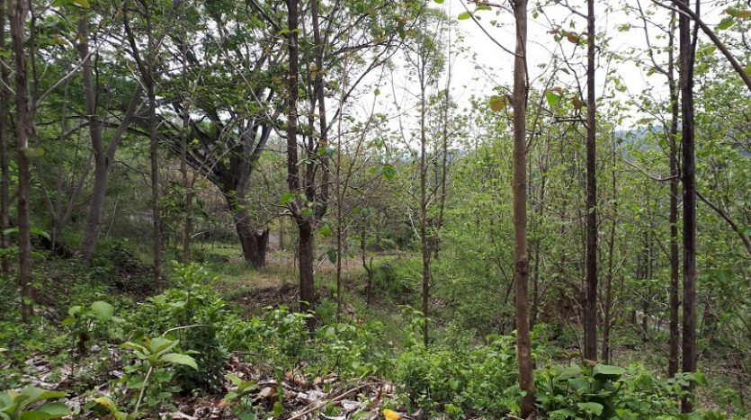 Costa Rica, building lot for sale, Atenas, highway 27