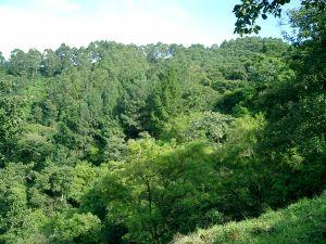 25 acres for sale farm Atenas Costa Rica