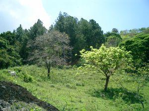 Farm for sale Atenas property Costa Rica