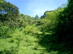 10 hectares for sale in Atenas, Costa Rica