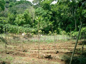 farm for sale near Atenas Costa Rica