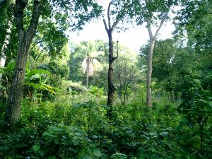 25 acres property for sale Atenas Costa Rica