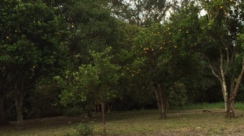 Atenas, Costa Rica lot for sale, fruit trees