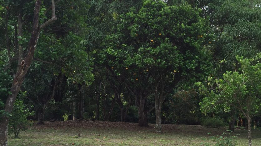 Atenas real estate property for sale in Costa Rica