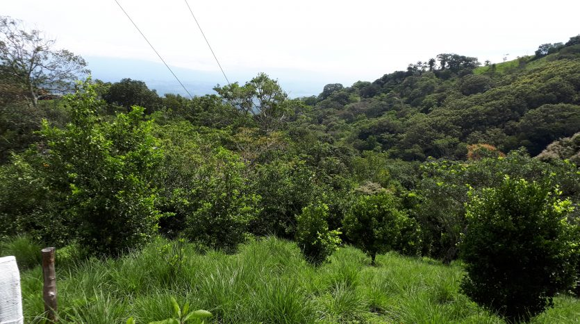 Lot with fruit trees for sale in Atenas Costa Rica