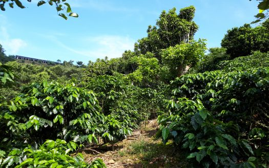 Coffee farm for sale in Atenas Costa Rica