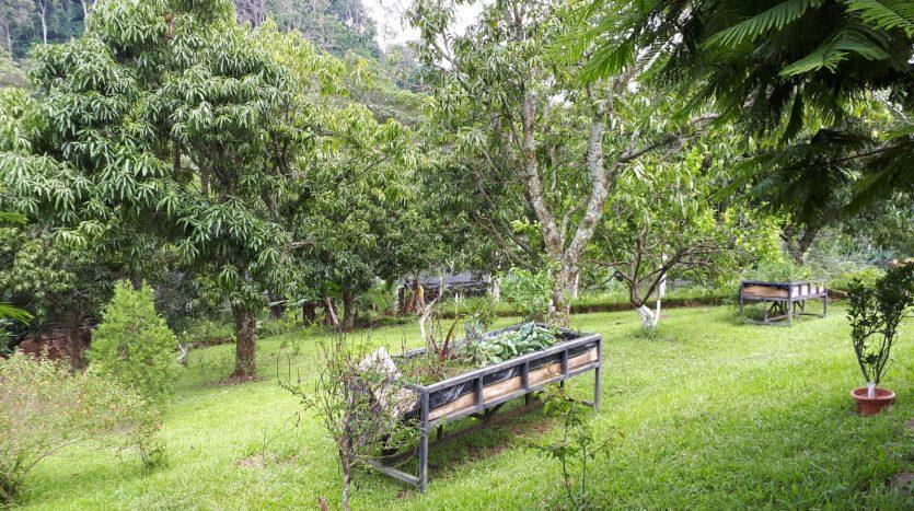 house for sale near Atenas in Costa Rica