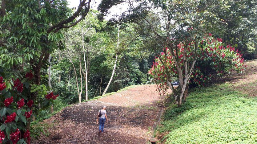 Bienes raices a la venta lote en Naranjo Costa Rica