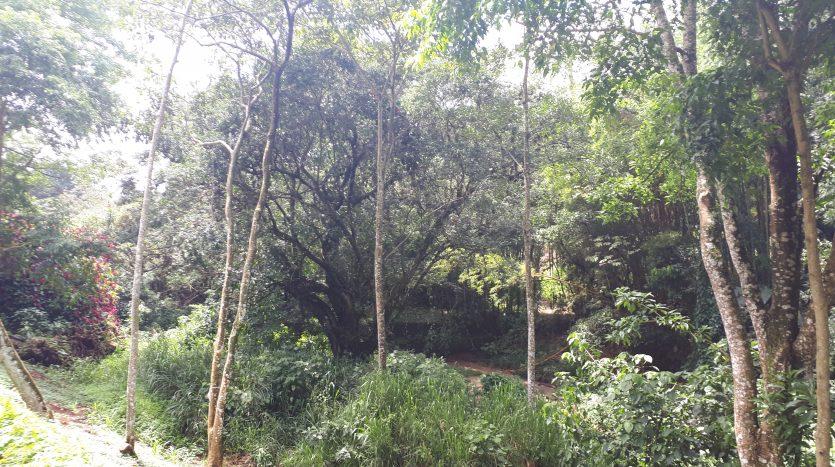 Costa Rica se vende lote en Naranjo bienes raices