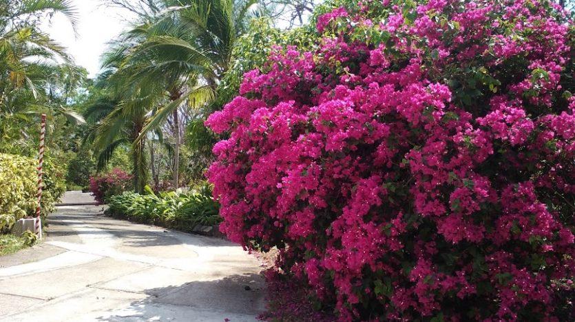 Costa Rica zillow properties