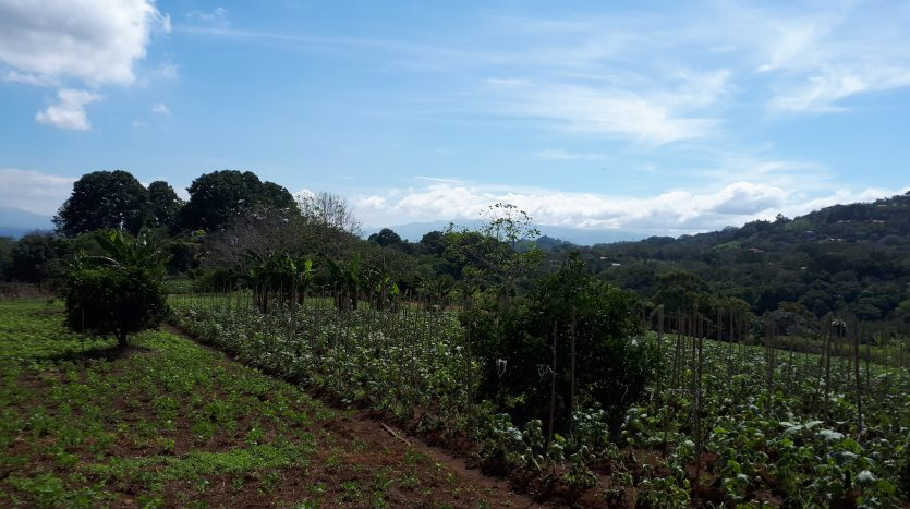 building lots for sale in Atenas Costa Rica to build your house