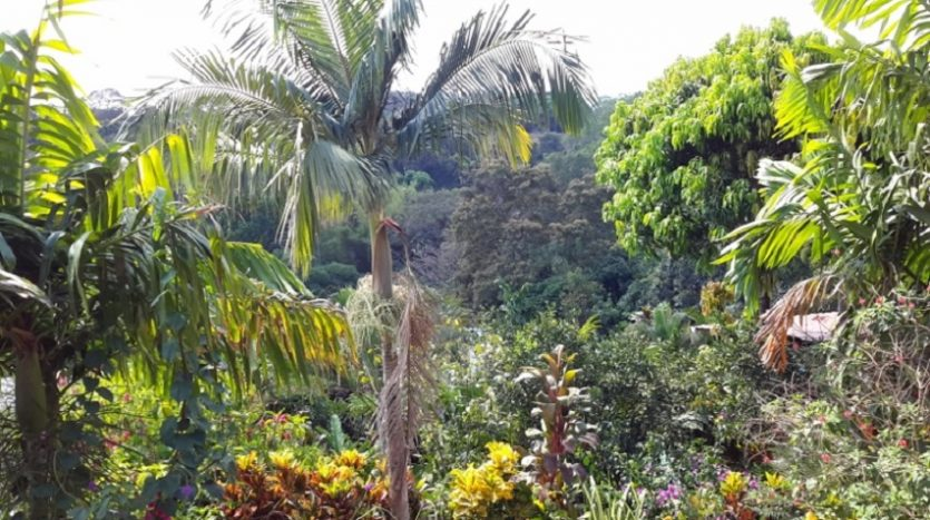 Atenas number 1 B&B for sale in Costa Rica