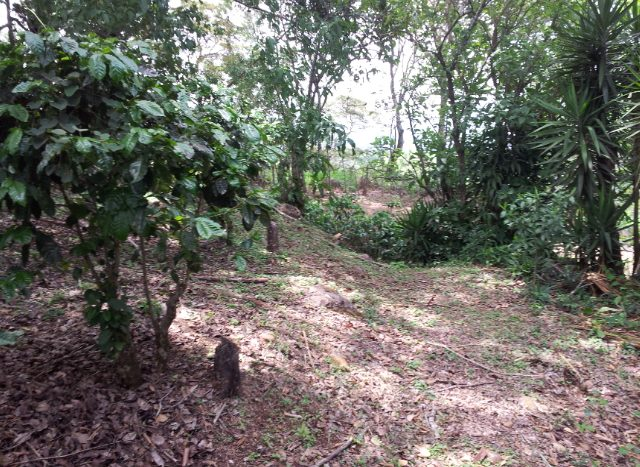 atenas real estate building lots and home for sale in costa rica